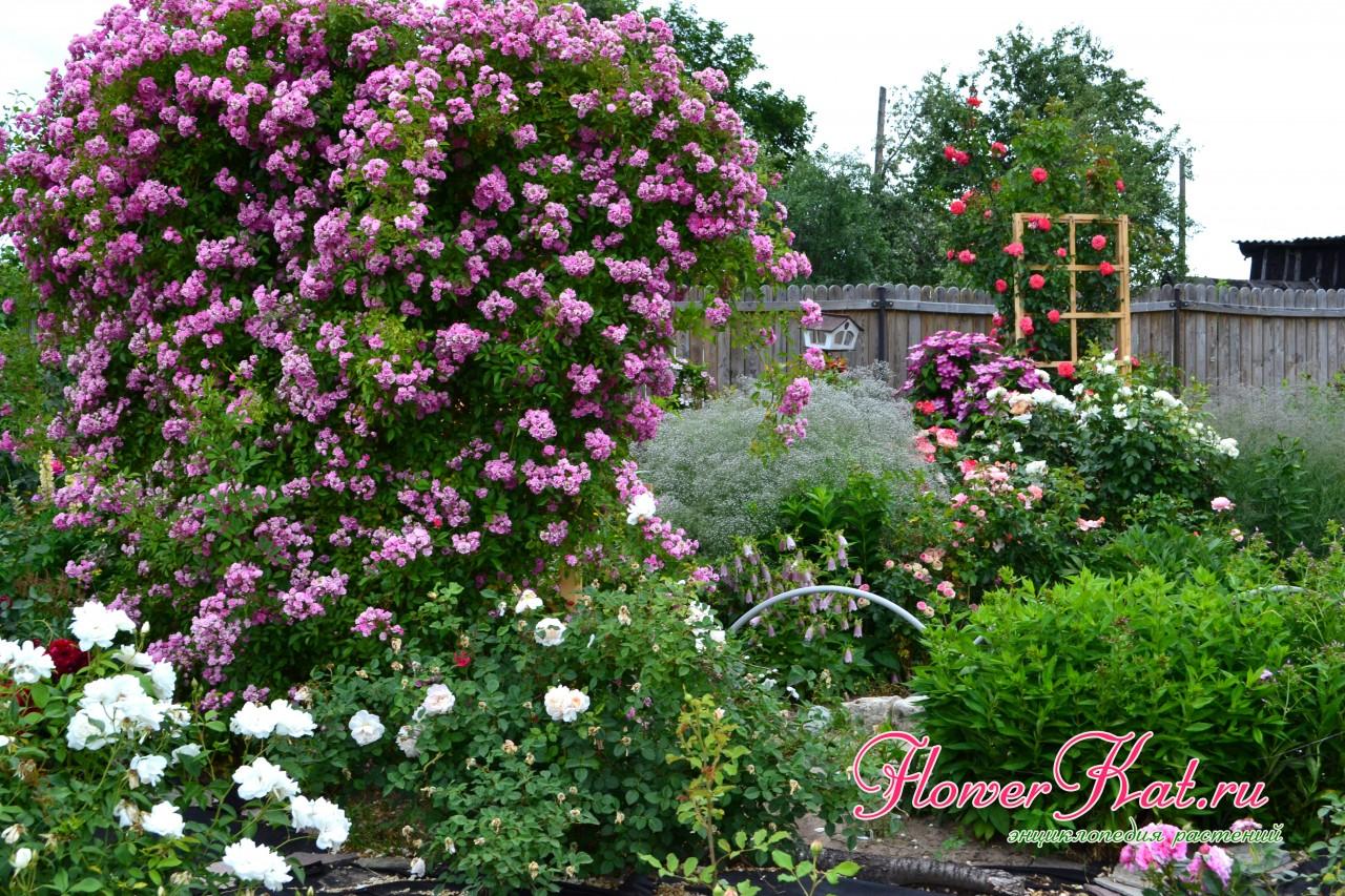 окна роза вартбург фото и описание иностранных государств